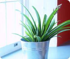 houseplant[1]