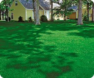 lawn-care[1]