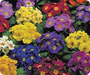 fall-annuals