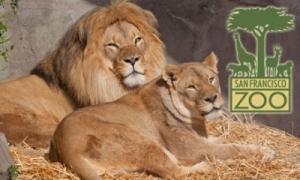 SF-Zoo